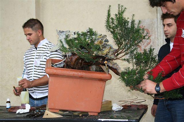 Next bonsai demo at my friend Stemberger Img_3212