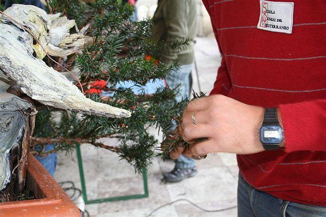 Next bonsai demo at my friend Stemberger Img_3214