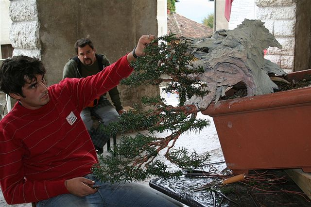 Next bonsai demo at my friend Stemberger Img_3215
