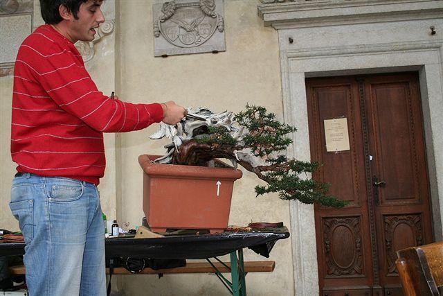 Next bonsai demo at my friend Stemberger Img_3216