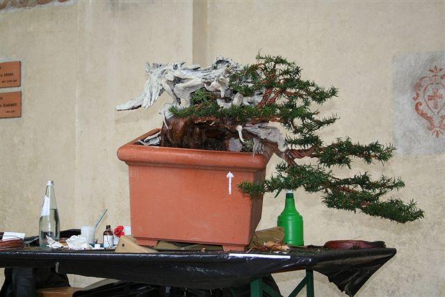 Next bonsai demo at my friend Stemberger Img_3217