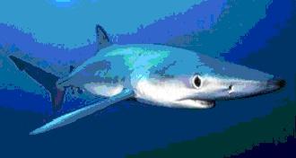 Escapade dans les Grenadines-2 Requin10