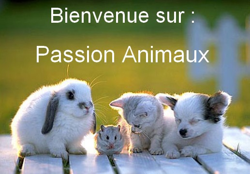 Passion Animaux !!! - Page 2 Animau16