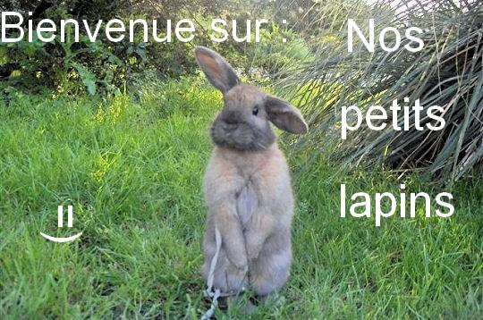 Nos petits lapins Lapin_10