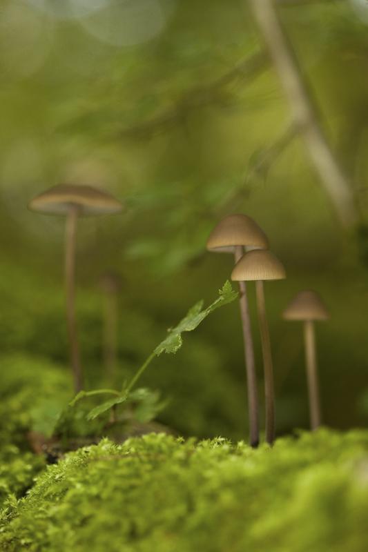 champignon Img_4612