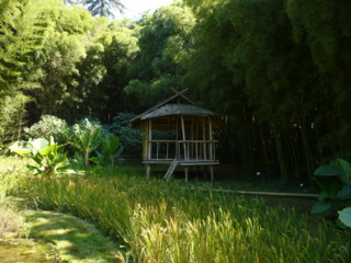 la bambouseraie Vacanc11