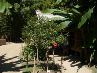 la bambouseraie Vacanc13