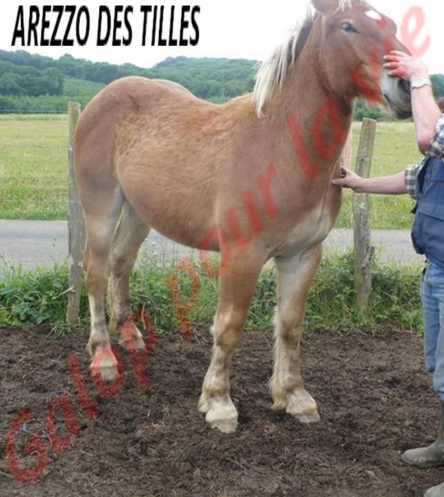 AREZZO - Trait Comtois né en 2010 - Adopté en juin 2011 Arezzo15