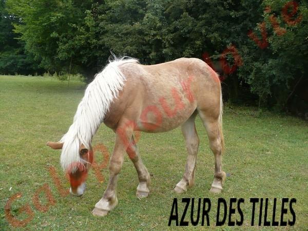 AZUR - PP Trait Comtois née en 2010 - adoptée en juin 2011 par adeline10 Azur_d12