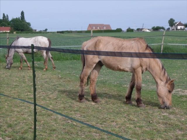 SAM - Poney typé Henson né en 1986 - adopté en septembre 2011 par Emeline - Page 2 Dscf0113