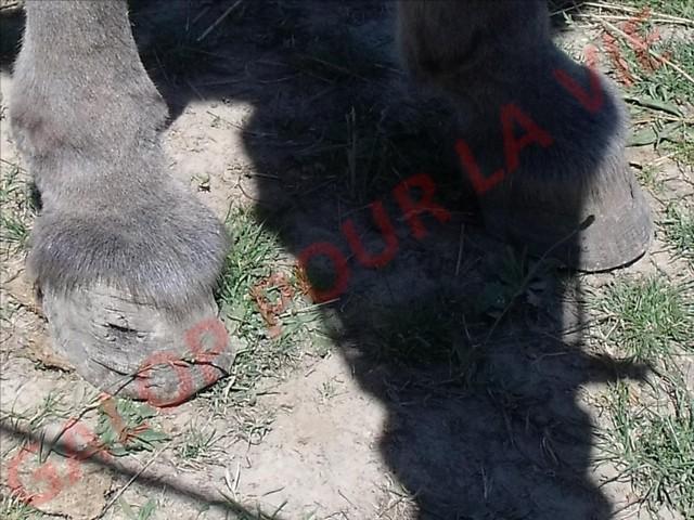 TAQUIN - Âne né en 2007 - adopté en septembre 2011 par vano50 Dscf0126