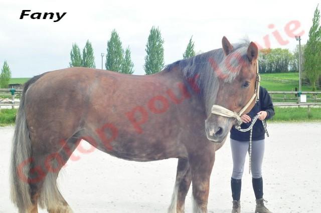 FANY - Trait Breton née en 1993 - Adoptée en juin 2011 par fluo Fany4_10