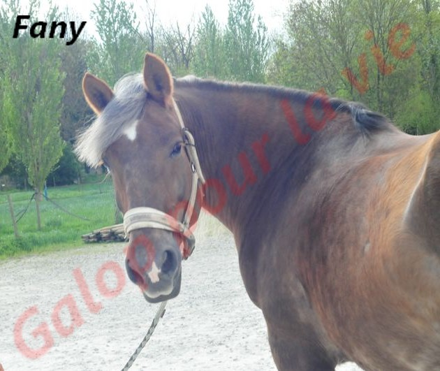 FANY - Trait Breton née en 1993 - Adoptée en juin 2011 par fluo Fany7_10