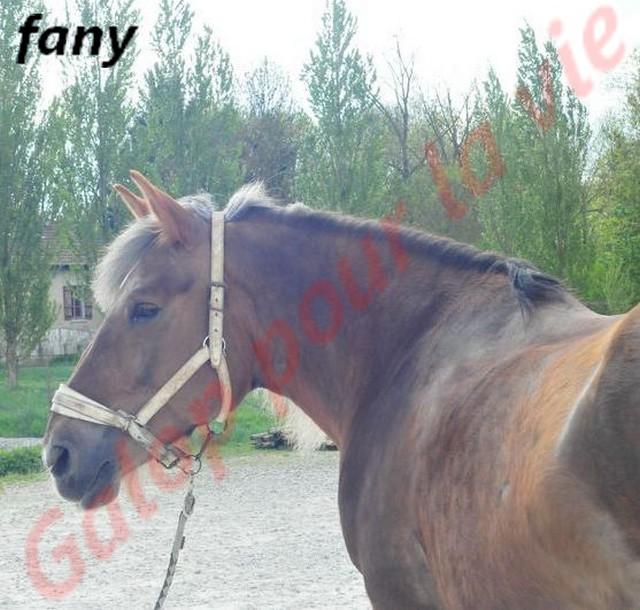 FANY - Trait Breton née en 1993 - Adoptée en juin 2011 par fluo Fany8710