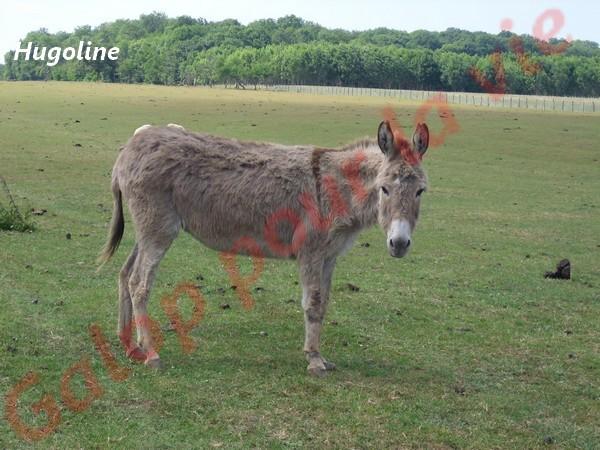 HUGOLINE - ânesse née en 1990 - adoptée en juin 2011 par Malik70 Hugoli12
