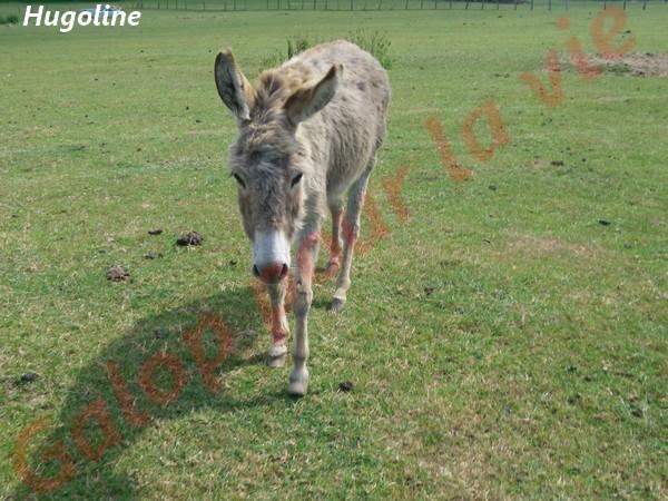 HUGOLINE - ânesse née en 1990 - adoptée en juin 2011 par Malik70 Hugoli15