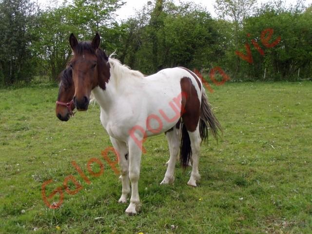 UKAN - OC Poney né en 2008 - adopté en juillet 2011 par Jean-Luc Nouvel10