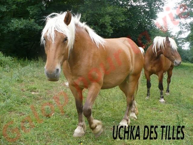 UCHKA des Tilles comtoise née en 2008 - placée hors association Uchka_10