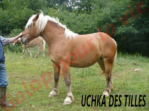 UCHKA des Tilles comtoise née en 2008 - placée hors association Uchka_12