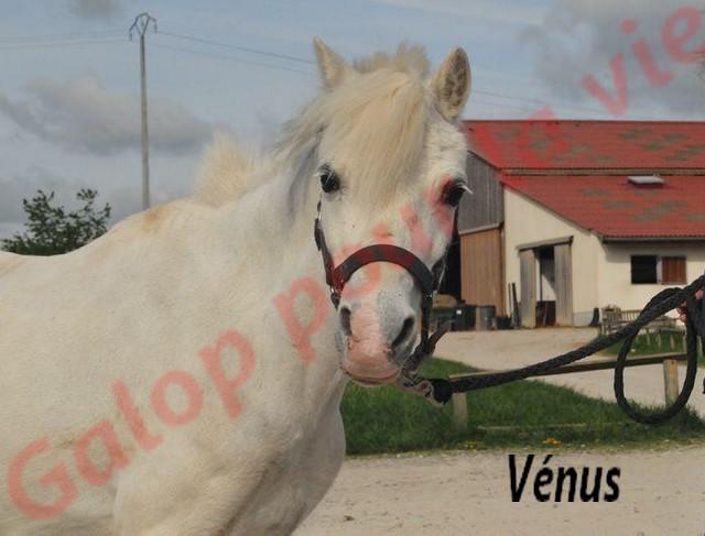 VENUS - ONC typée Welsh née en 1996 - adoptée en juin 2011 par Florent Venus111