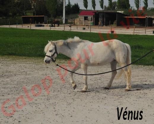 VENUS - ONC typée Welsh née en 1996 - adoptée en juin 2011 par Florent Venus211