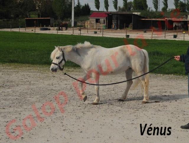 VENUS - ONC typée Welsh née en 1996 - adoptée en juin 2011 par Florent Venus410