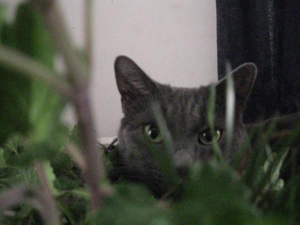 Assignment 7: photo scavenger hunt ELUDE due Sep 24 Jj10