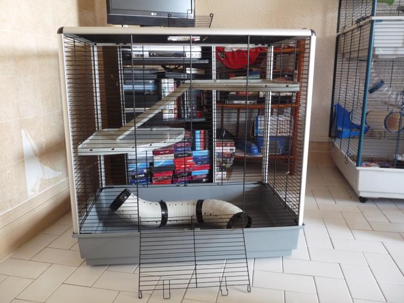Vend cage Jenny KD  (91, rp) P1070810
