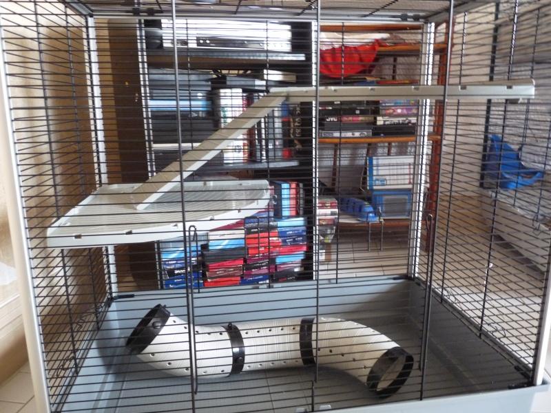 Vend cage Jenny KD  (91, rp) P1070811