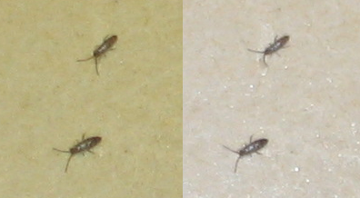 Petit insecte dans ma cuisine Bugs10