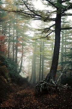 Aokigahara - La forêt maudite ! Aokiga10