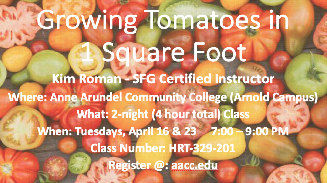 CLASS - Square Foot Tomatoes Aacc_c10