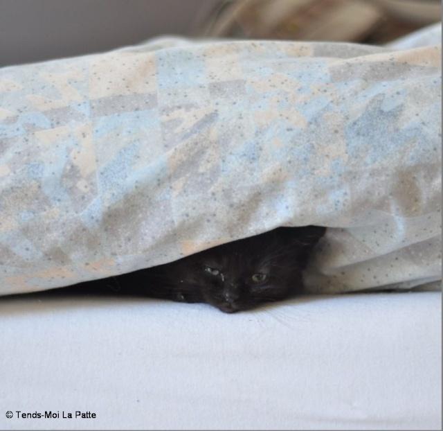 Zöyo et Lyka, petits chatons noirs A13