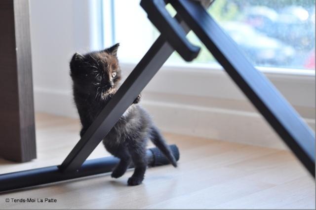 Zöyo et Lyka, petits chatons noirs B14