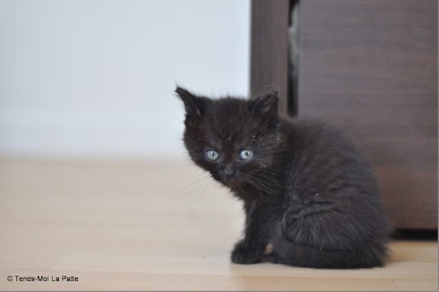 Zöyo et Lyka, petits chatons noirs C13