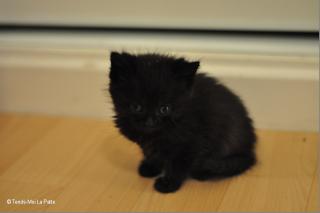 Zöyo et Lyka, petits chatons noirs Dsc_0611