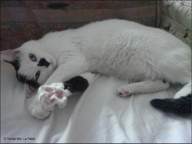 """FIGOLU rebaptisé """"PEPITO"""" mâle blanc et noir de 1 an Pictur28"""