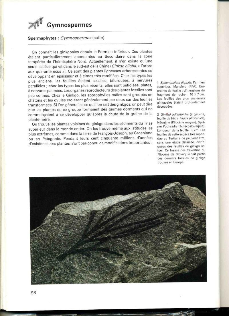 Les espèces panchroniques (ou survivantes de la Préhistoire) - végétaux Ginko010