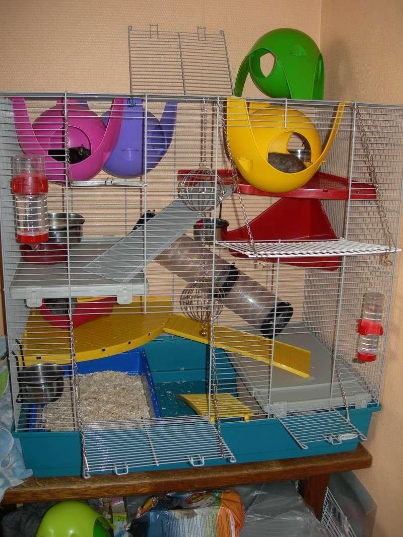 Choix d'une nouvelle cage 14011