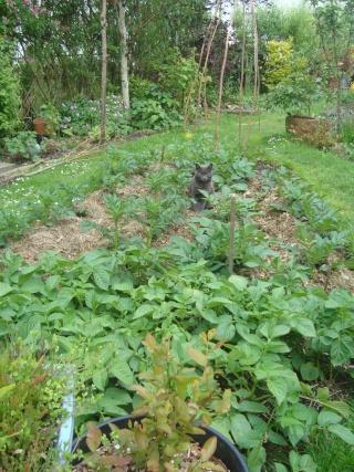 Gardening Updates 03511