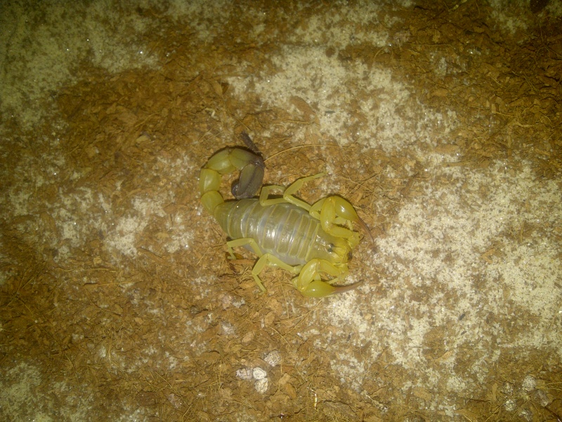 Envyizm's scorpion pictures Img-2016
