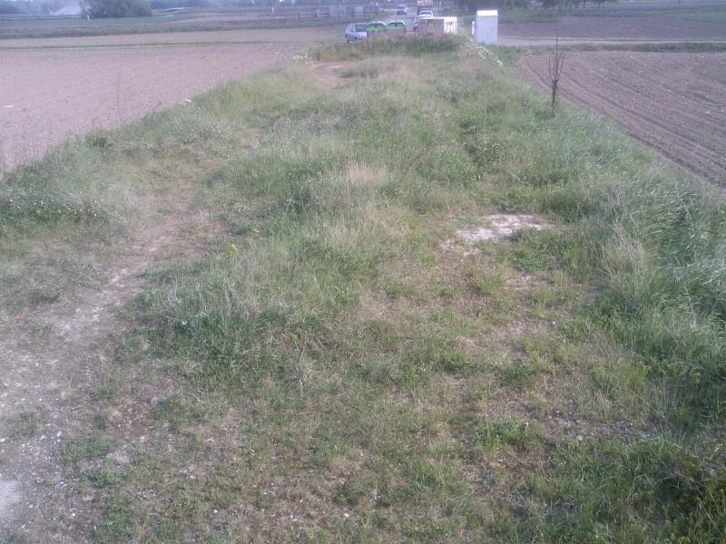 Petit ovale abandonné près de kilstett Sp_a0014