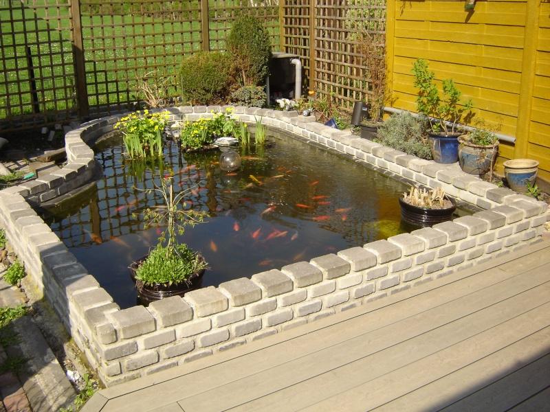 contruire un bassin  jardin Dsc06510