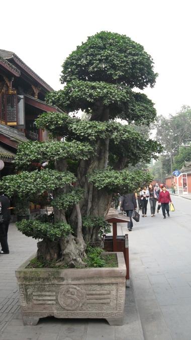 Forgotten trees ? Img_3510