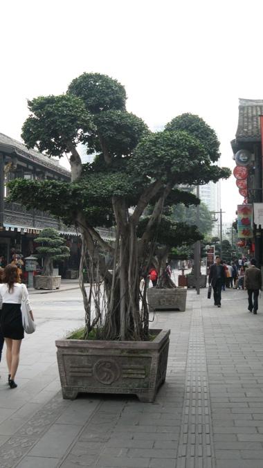 Forgotten trees ? Img_3511