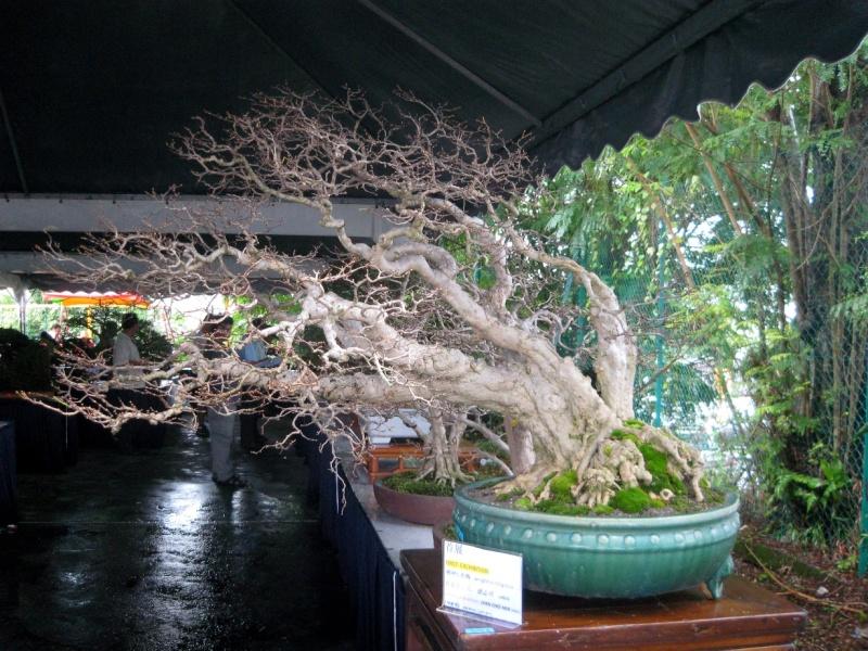 3rd Malaysia Bonsai Carnival-Baeckea Frutescens almost steal the show Img_4010
