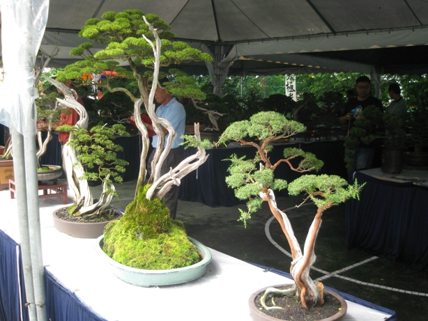 3rd Malaysia Bonsai Carnival-Baeckea Frutescens almost steal the show Img_4021