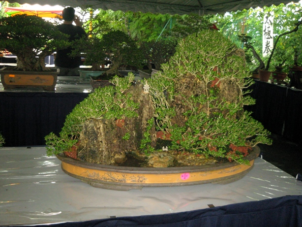 3rd Malaysia Bonsai Carnival-Baeckea Frutescens almost steal the show Img_4024