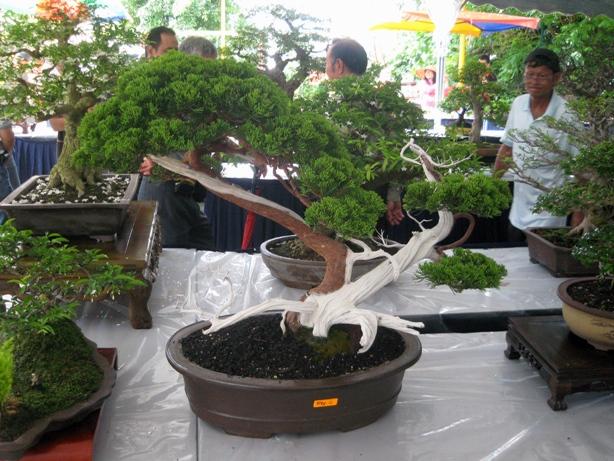 3rd Malaysia Bonsai Carnival-Baeckea Frutescens almost steal the show Img_4026