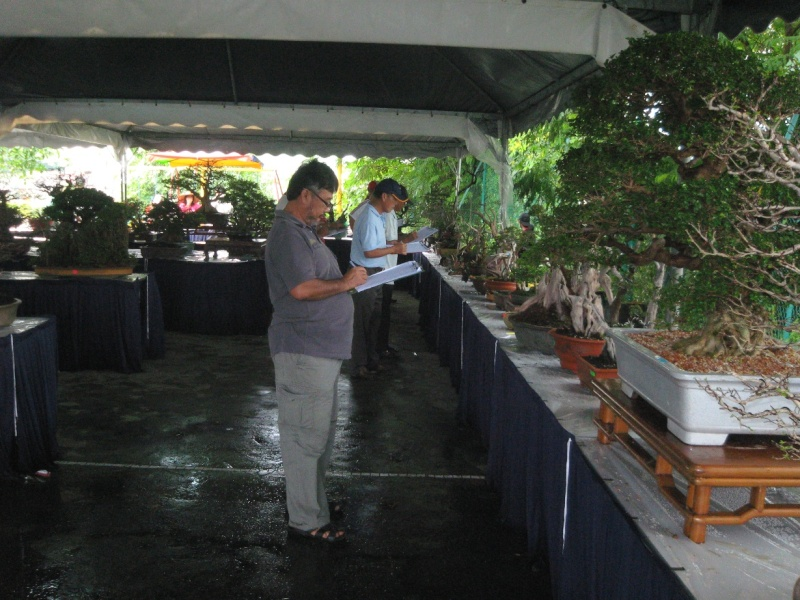 3rd Malaysia Bonsai Carnival-Baeckea Frutescens almost steal the show Img_4031